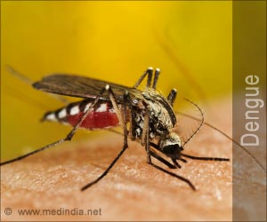 Test Your Knowledge on Dengue