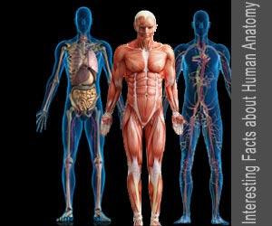 Quiz on Interesting Facts about Human Anatomy / Human body (Advance)