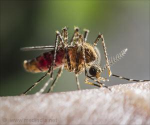 Test Your Knowledge on Zika Virus