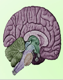 Quiz On Alzheimer's Disease
