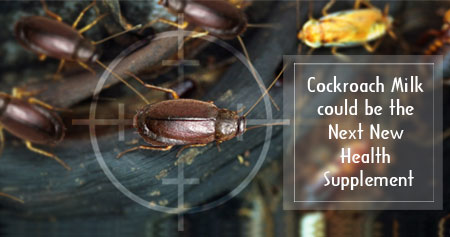 �Cockroach Milk� - The Best Superfood of the Future