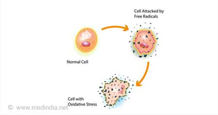 Oxidative Stress / Free Radicals Cell Injury
