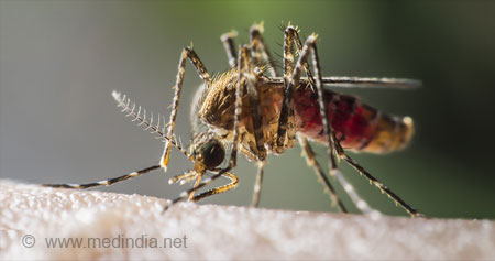 Yellow Fever / Acute Viral Hemorrhagic Fever