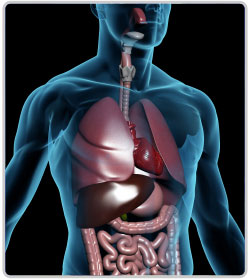 Know Your Body - Respiratory System