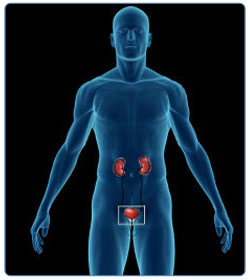 Know Your Body - Urinary System