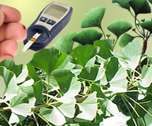 Ginkgo Biloba May Prevent Atherosclerosis In Diabetes Patients