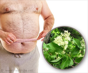 Celastrol may be Effective in Obesity – However Needs Clinical Trials for Approval