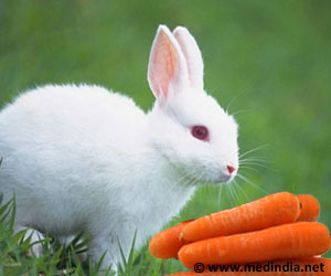 Carrots Not Good For Rabbits, Says RSPCA