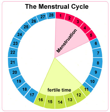 Menstrual Chart Calculator
