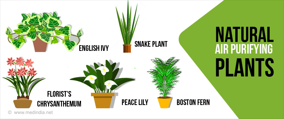 Top 10 air purifying plants for Best air filtering houseplants