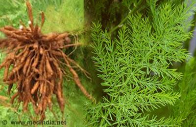 ayurvedic plants information in hindi pdf