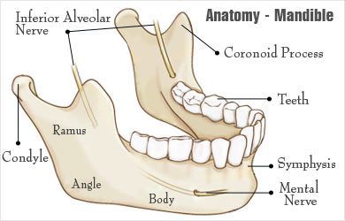 broken jaw | mandibular fracture - types, causes, symptoms, first, Human Body