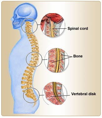 Back Pain Symptoms Causes Diagnosis Treatment Prevention