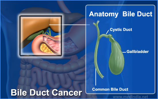common bile duct. The common bile duct ends in