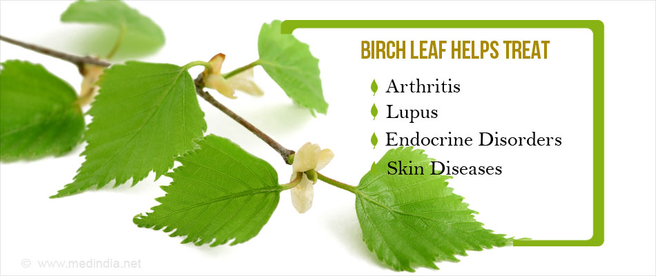 Birch Leaf - Powerful Pain-reliever