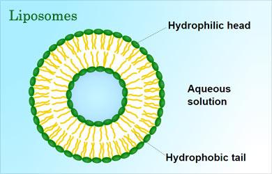 Bacterial Vehicle Of Drugs