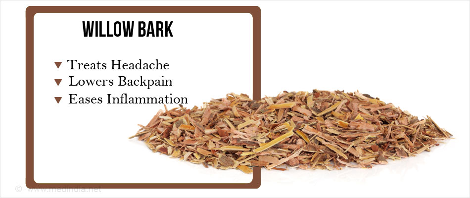 Willow Bark- A Natural Painkiller