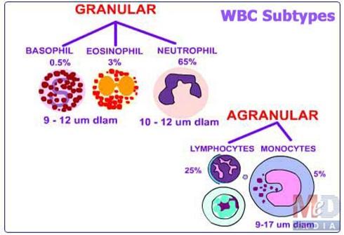 Leukemia/ Blood Cancer